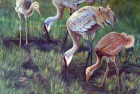 Luncheon on the Grass–Sandhill Crane Family